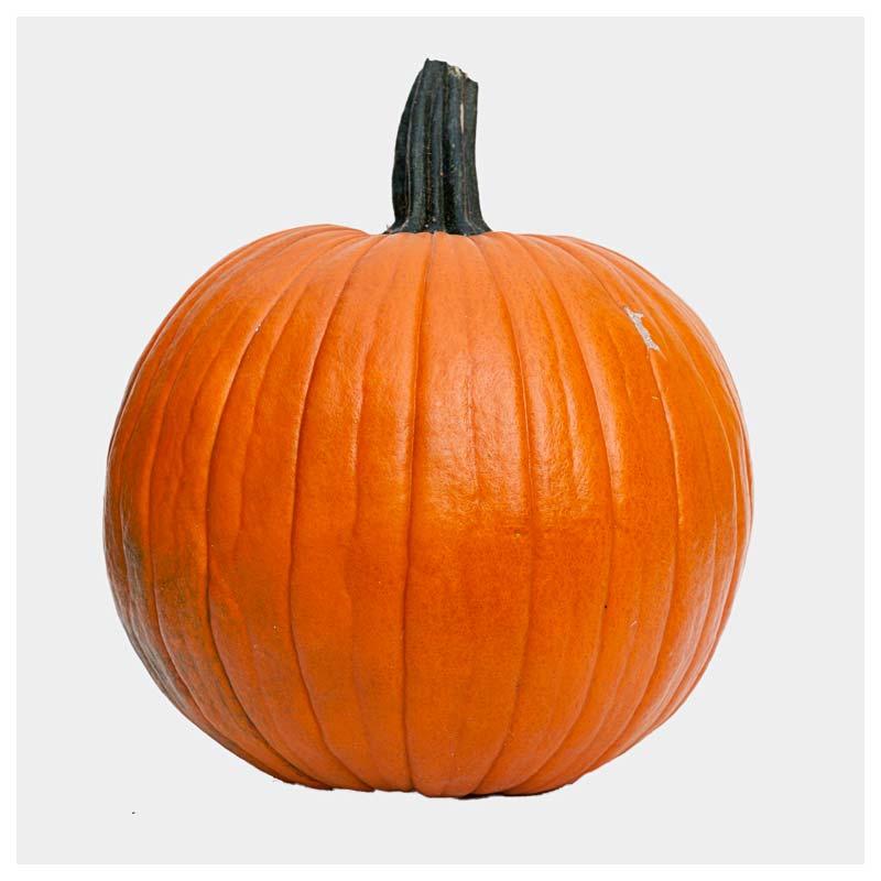 pumpkin pie usa